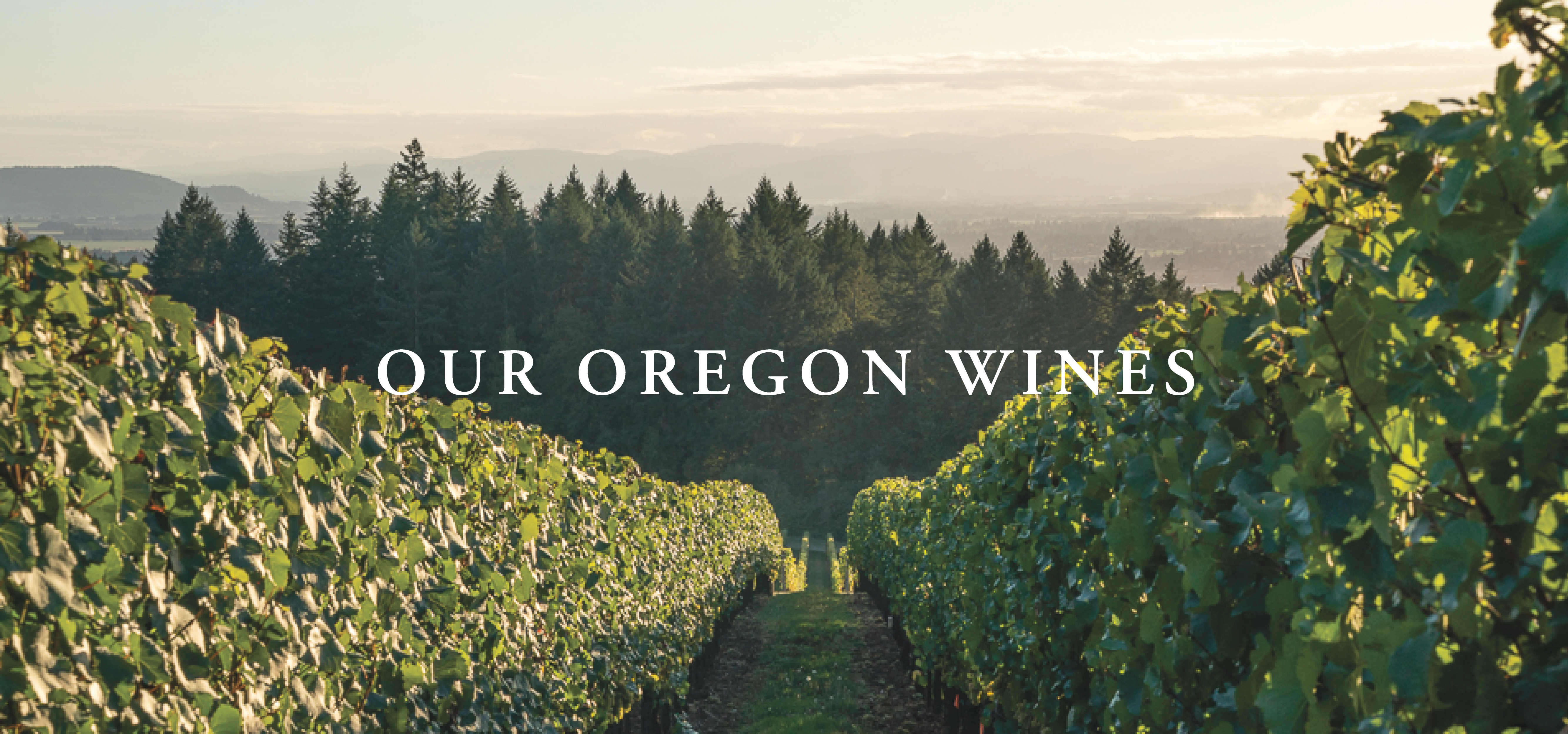Our Oregon Wines