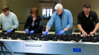 Ken and Grace Sorting Line