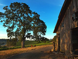 2013 - Domaine Serene purchases the Two Barns Vineyard